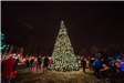People stand around a large pine tree covered in white holiday lights during the Winter Lighting Cer
