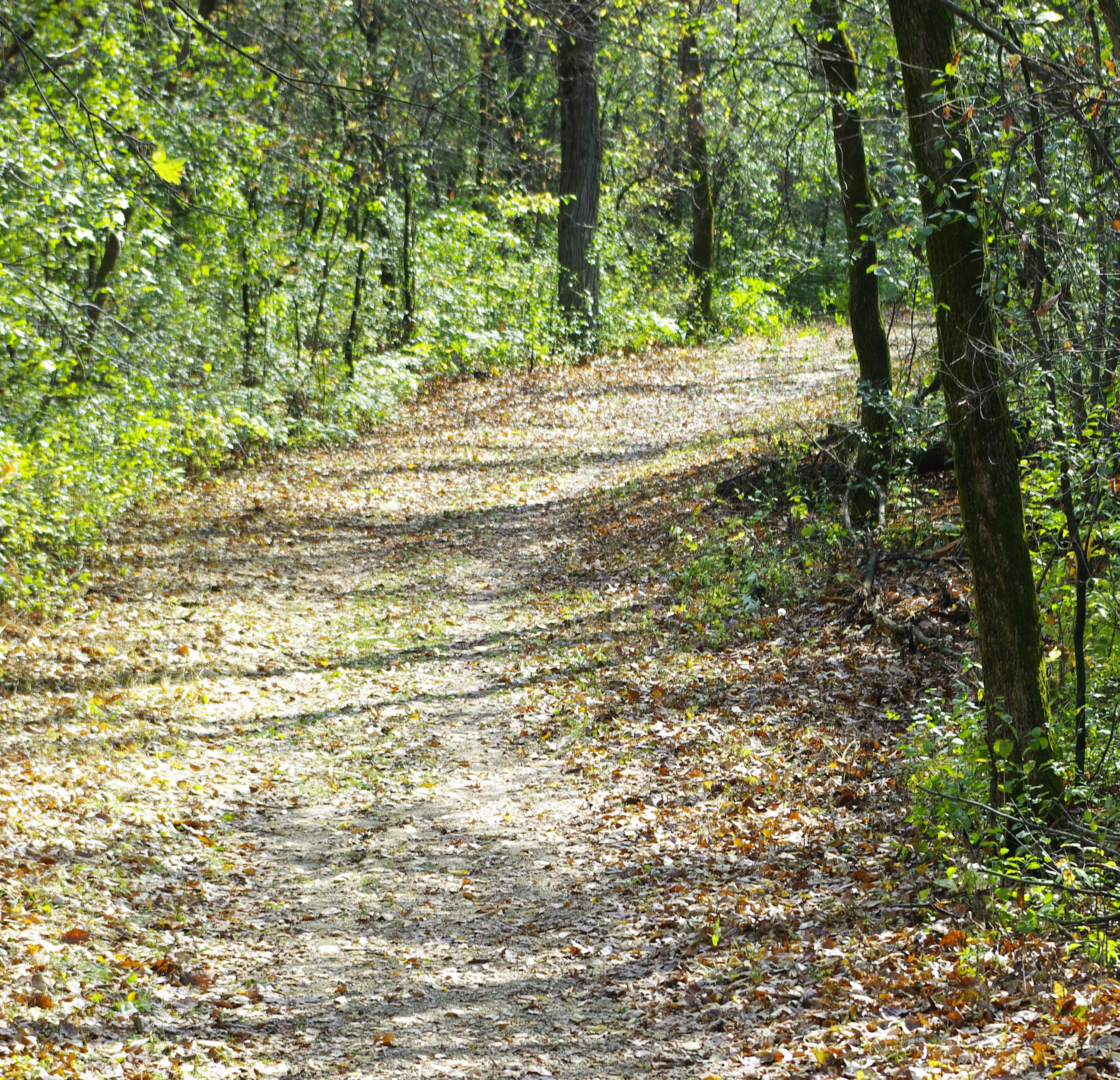 Trail at Terrace Oaks Park