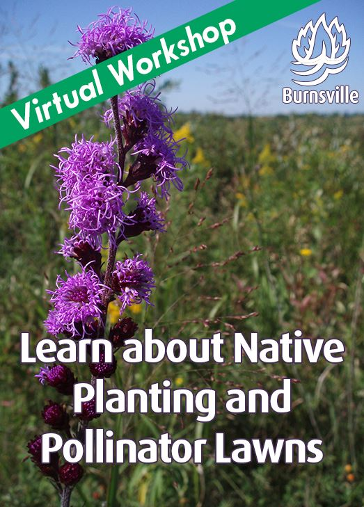 Photo of native plants. Texts reads learn more about native planting and pollinator lawns