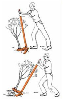 Buckthorn removal method