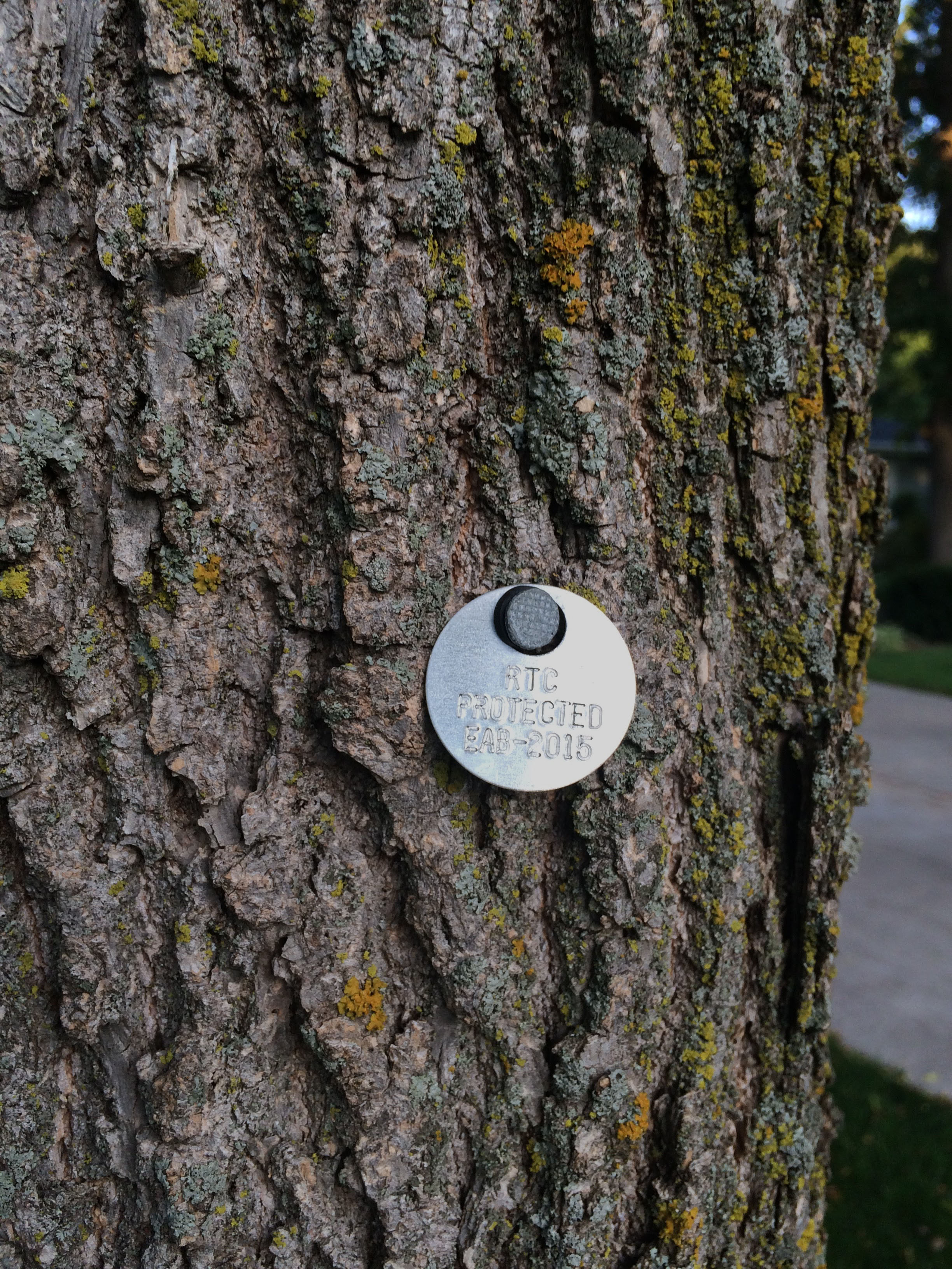 EAB treatment tag 2015_close adjusted.jpg