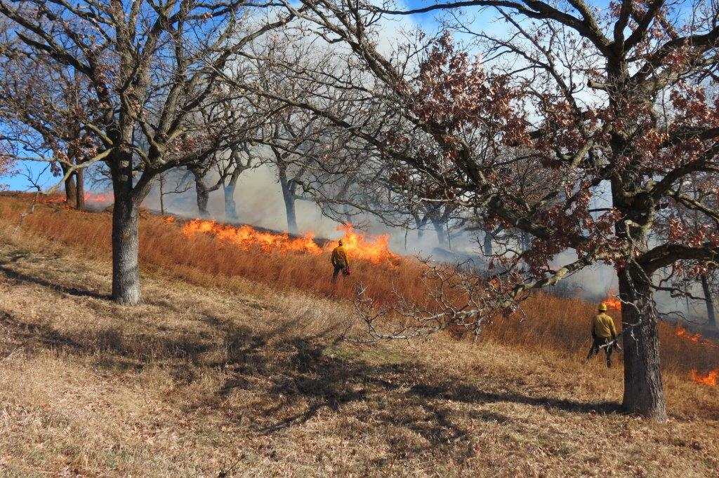 Controlled burn in progress