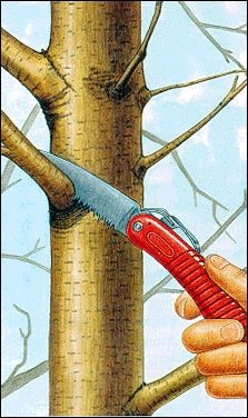 USDA tree prune.jpg