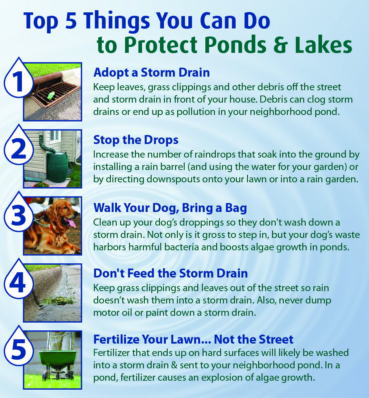 Top 5 Things for Lakes Ponds.jpg