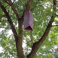 EAB Trap in Burnsville Park